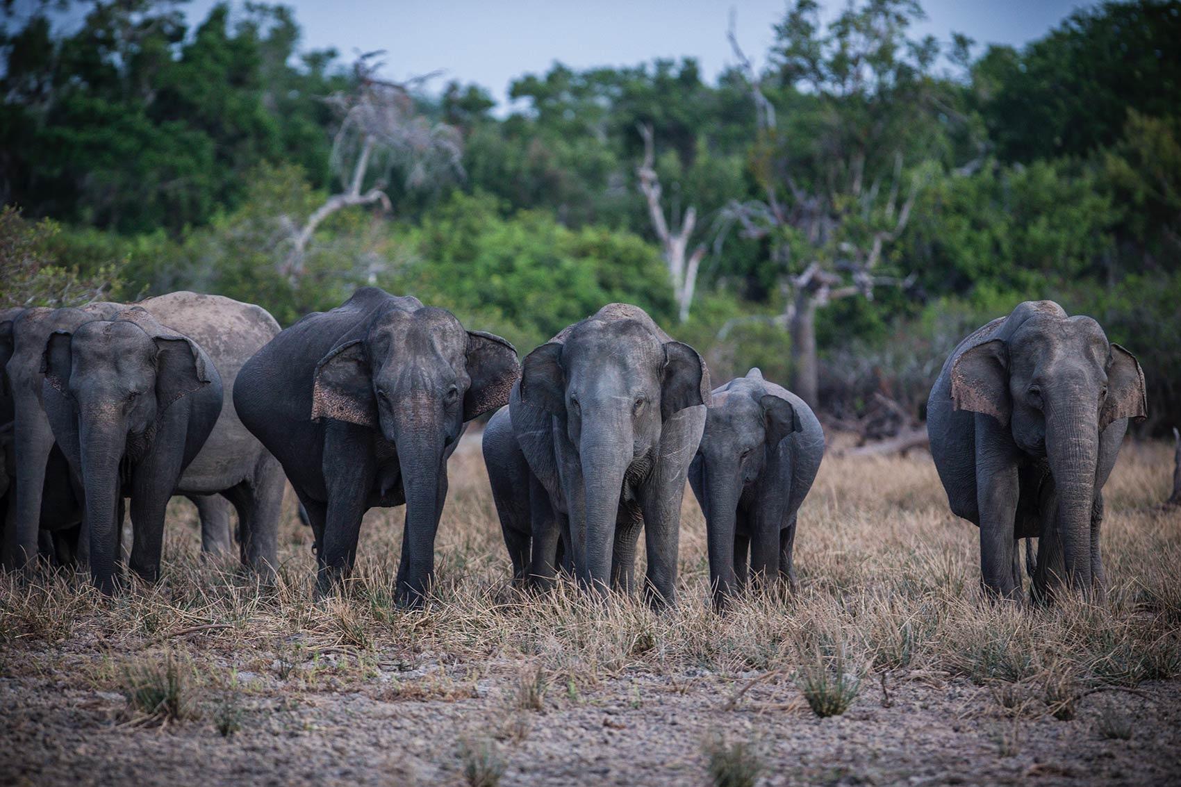2. Safari Expedition